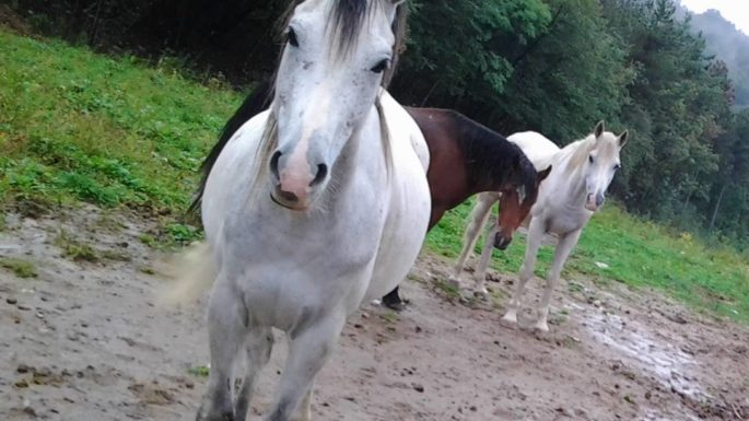 Cavalli Agritur La Dolce Mela